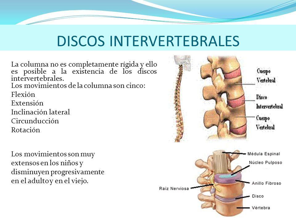 Magnífico Discos De La Columna Bandera - Imágenes de Anatomía Humana ...