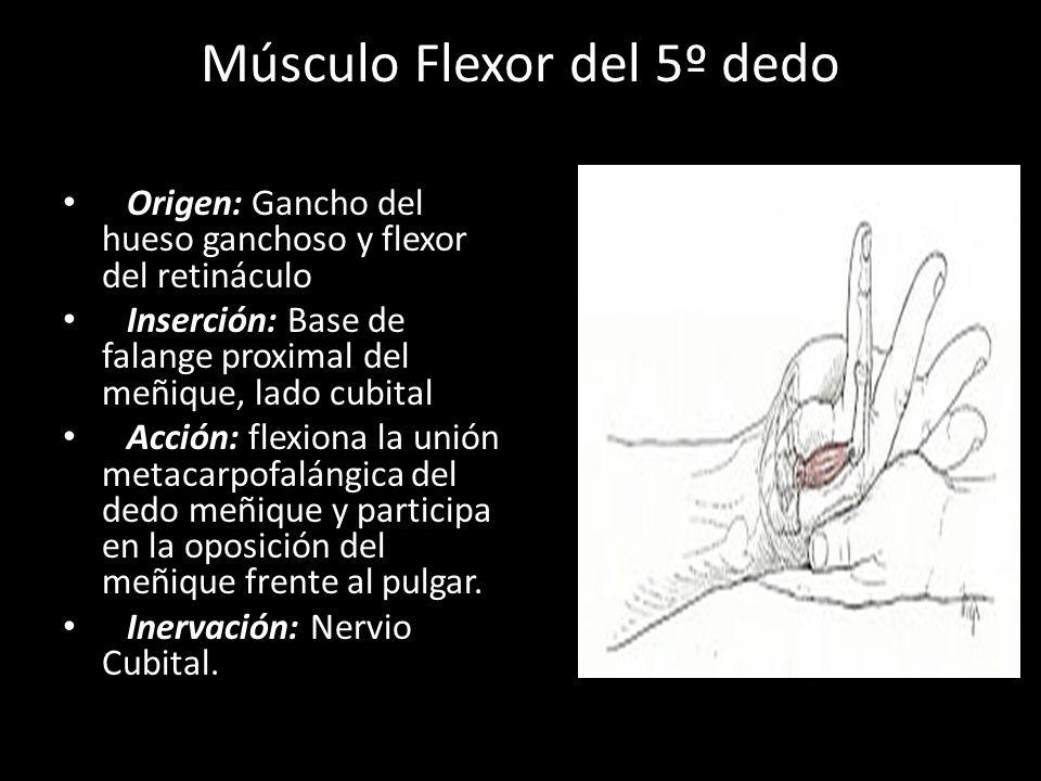 Asombroso Anatomía Dedo Meñique Molde - Imágenes de Anatomía Humana ...