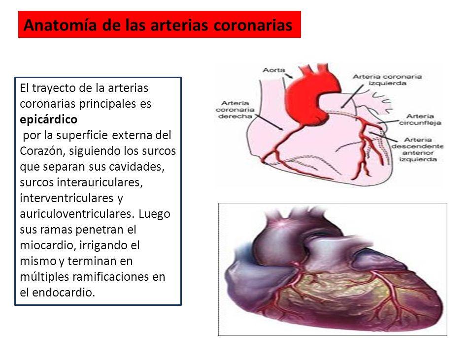 Excelente Arteria Coronaria Anatomía Ppt Bosquejo - Anatomía de Las ...