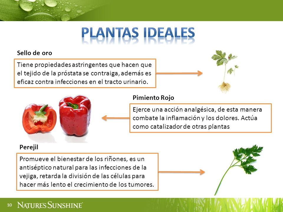 PLANTAS ideales Sello de oro