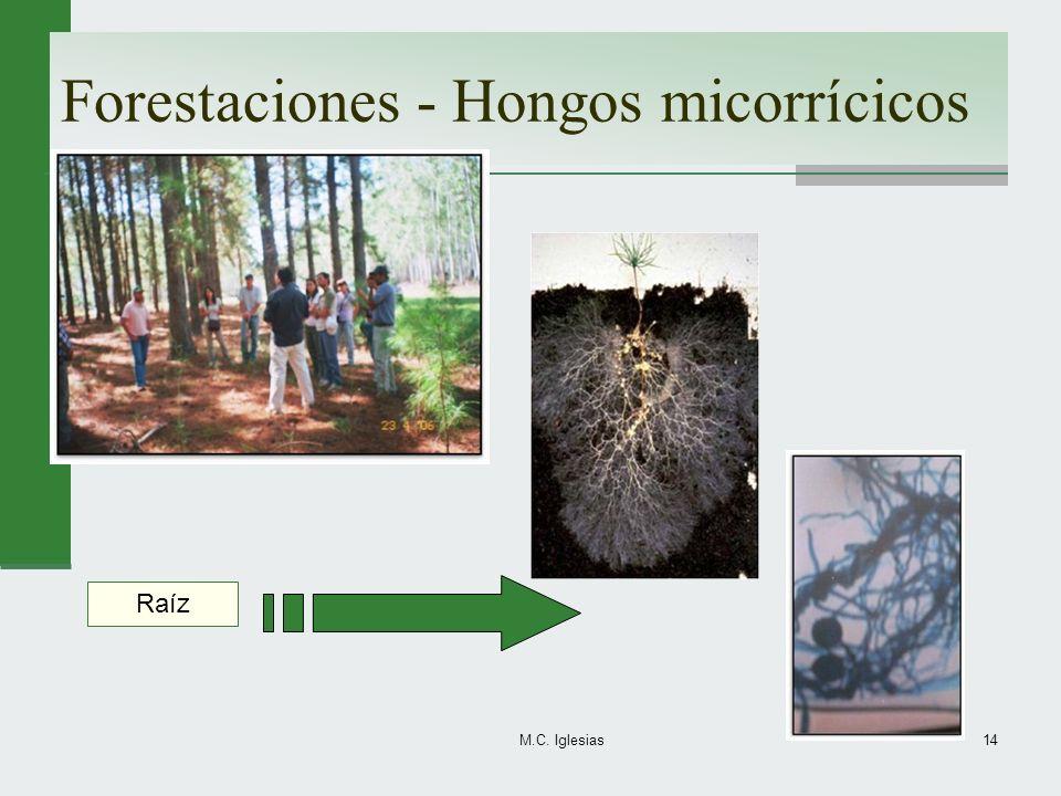 Forestaciones - Hongos micorrícicos