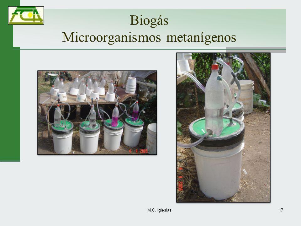 Biogás Microorganismos metanígenos