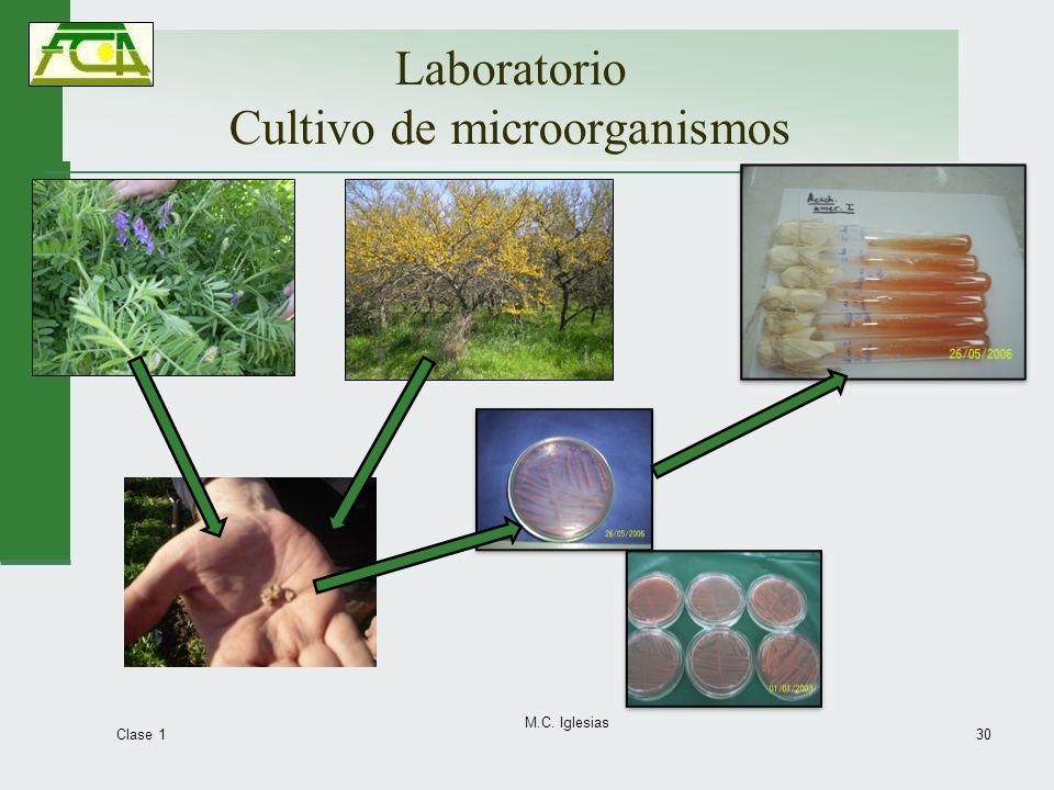 Laboratorio Cultivo de microorganismos