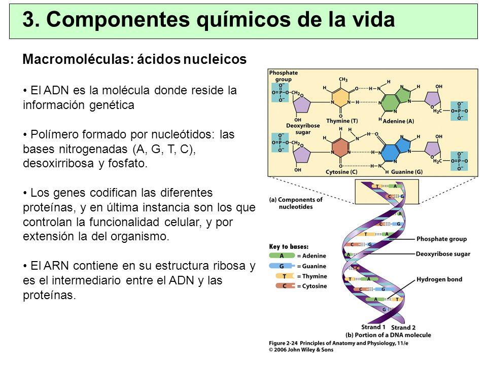 3. Componentes químicos de la vida