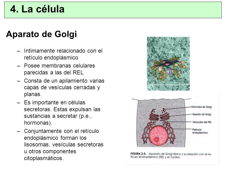 4. La célula Aparato de Golgi