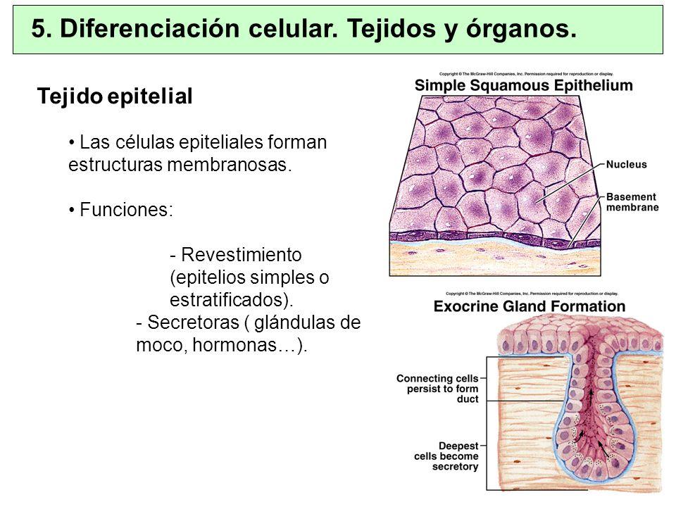 5. Diferenciación celular. Tejidos y órganos.