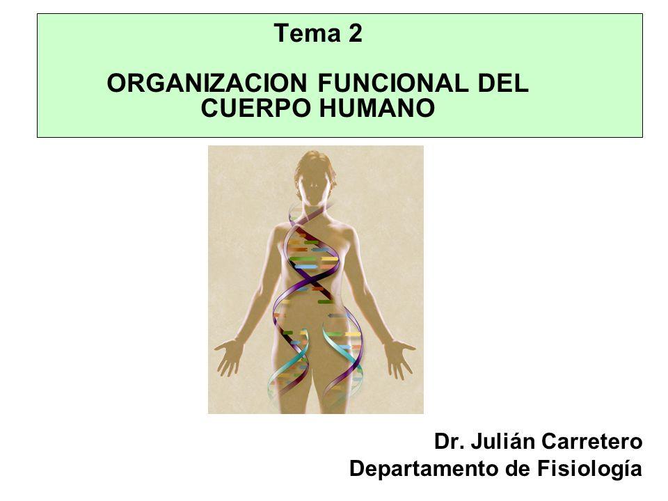 Tema 2 ORGANIZACION FUNCIONAL DEL CUERPO HUMANO