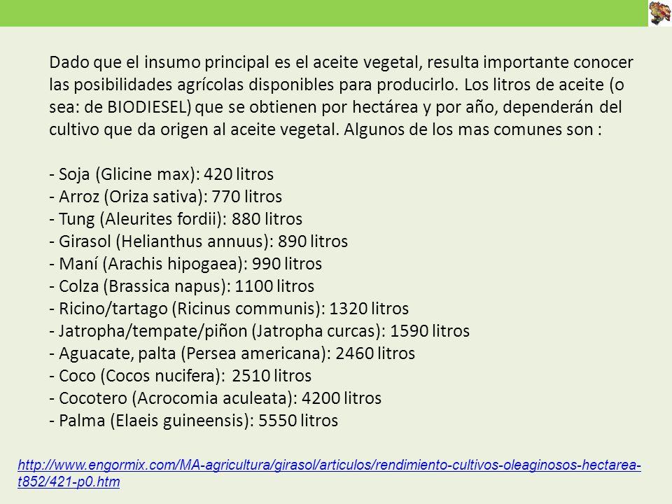 Dado que el insumo principal es el aceite vegetal, resulta importante conocer las posibilidades agrícolas disponibles para producirlo. Los litros de aceite (o sea: de BIODIESEL) que se obtienen por hectárea y por año, dependerán del cultivo que da origen al aceite vegetal. Algunos de los mas comunes son : - Soja (Glicine max): 420 litros - Arroz (Oriza sativa): 770 litros - Tung (Aleurites fordii): 880 litros - Girasol (Helianthus annuus): 890 litros - Maní (Arachis hipogaea): 990 litros - Colza (Brassica napus): 1100 litros - Ricino/tartago (Ricinus communis): 1320 litros - Jatropha/tempate/piñon (Jatropha curcas): 1590 litros - Aguacate, palta (Persea americana): 2460 litros - Coco (Cocos nucifera): 2510 litros - Cocotero (Acrocomia aculeata): 4200 litros - Palma (Elaeis guineensis): 5550 litros