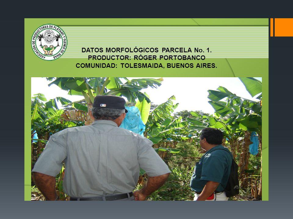 DATOS MORFOLÓGICOS PARCELA No. 1