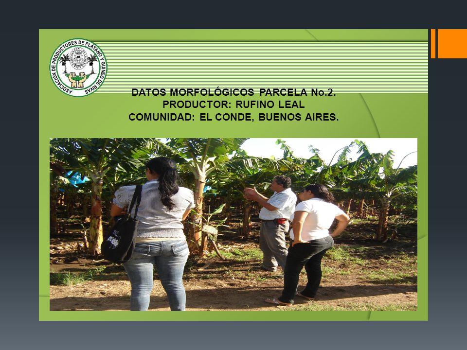DATOS MORFOLÓGICOS PARCELA No. 2