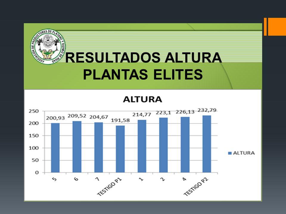 RESULTADOS ALTURA PLANTAS ELITES