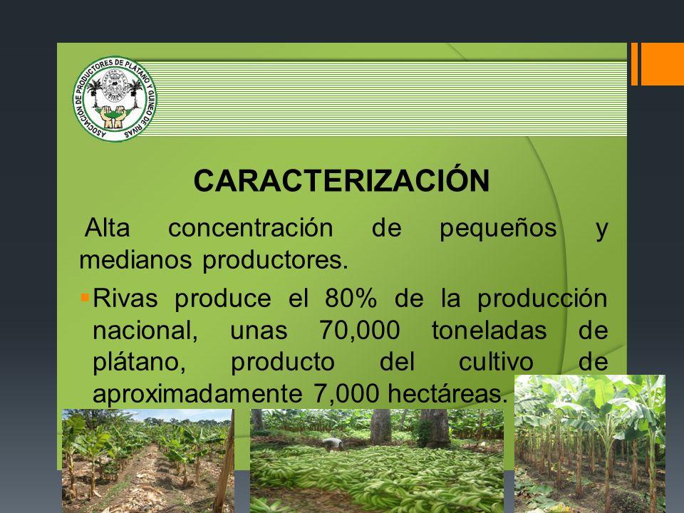 CARACTERIZACIÓN Alta concentración de pequeños y medianos productores.