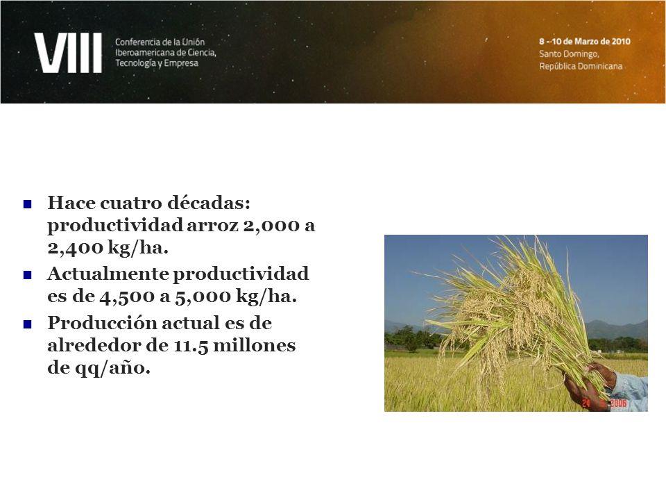 Hace cuatro décadas: productividad arroz 2,000 a 2,400 kg/ha.