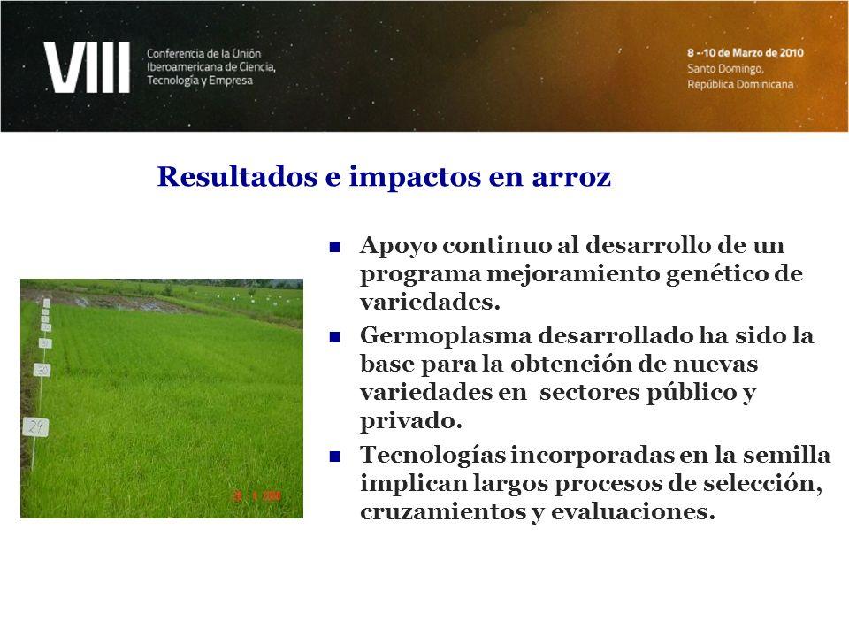 Resultados e impactos en arroz