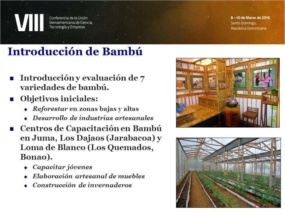 Introducción de Bambú Introducción y evaluación de 7 variedades de bambú. Objetivos iniciales: Reforestar en zonas bajas y altas.