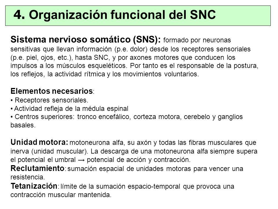 4. Organización funcional del SNC