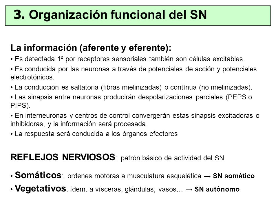 3. Organización funcional del SN