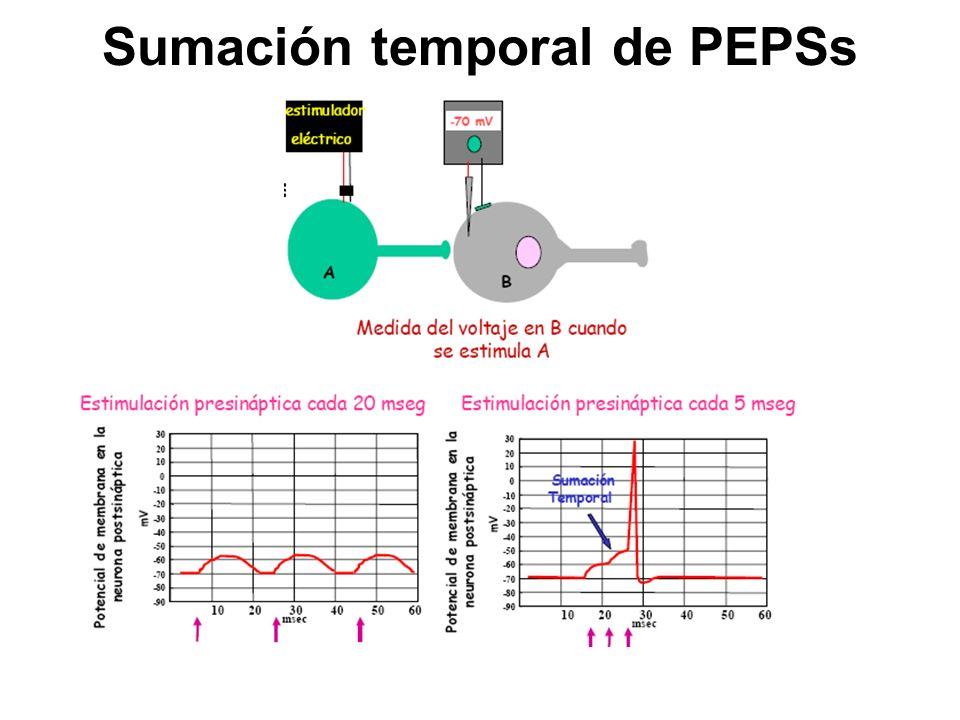 Sumación temporal de PEPSs