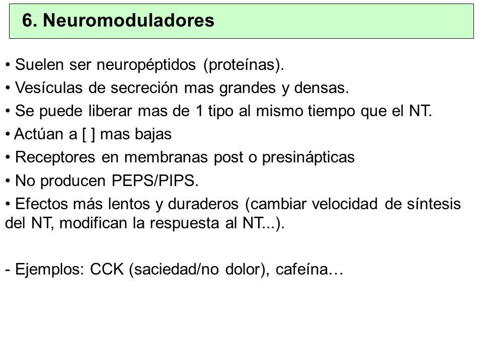 6. Neuromoduladores Suelen ser neuropéptidos (proteínas).