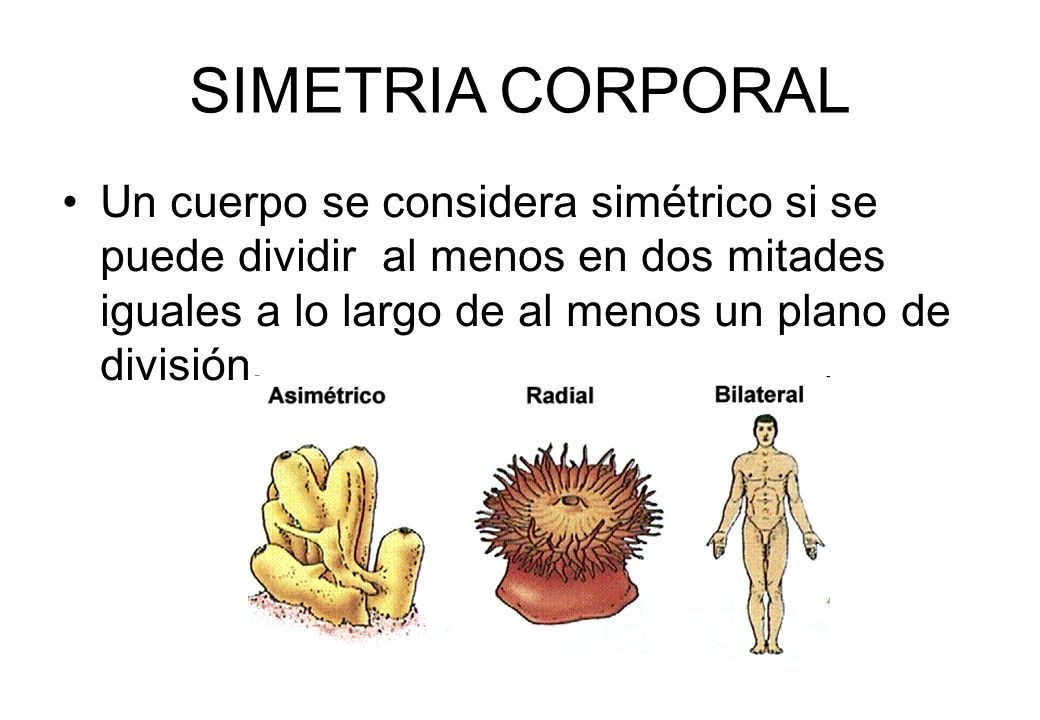 reino animalia ppt video online descargar