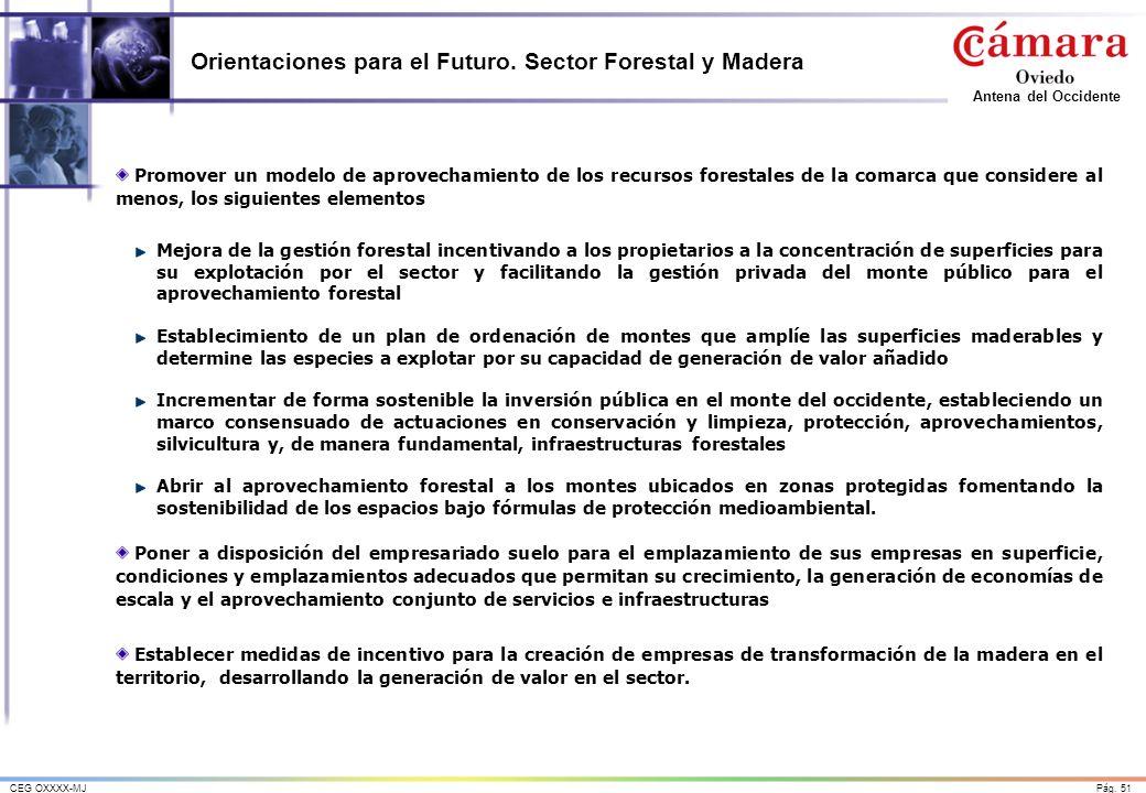 Orientaciones para el Futuro. Sector Forestal y Madera