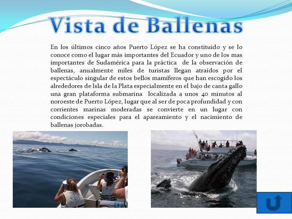 Vista de Ballenas