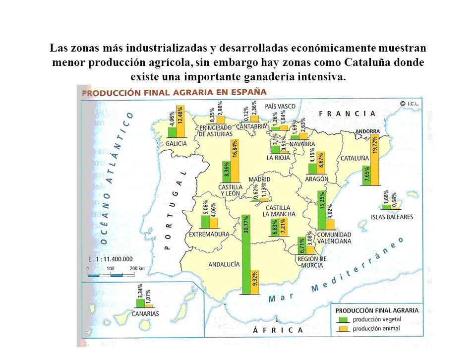 Las zonas más industrializadas y desarrolladas económicamente muestran menor producción agrícola, sin embargo hay zonas como Cataluña donde existe una importante ganadería intensiva.