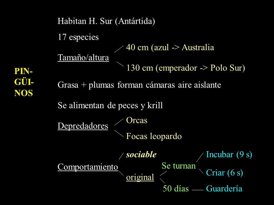 PIN-GÜI-NOS Habitan H. Sur (Antártida) 17 especies. Tamaño/altura. Grasa + plumas forman cámaras aire aislante.