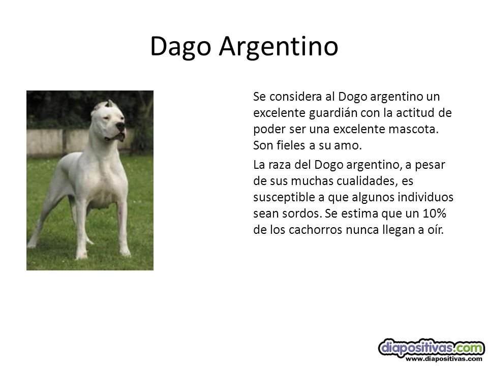 Dago Argentino
