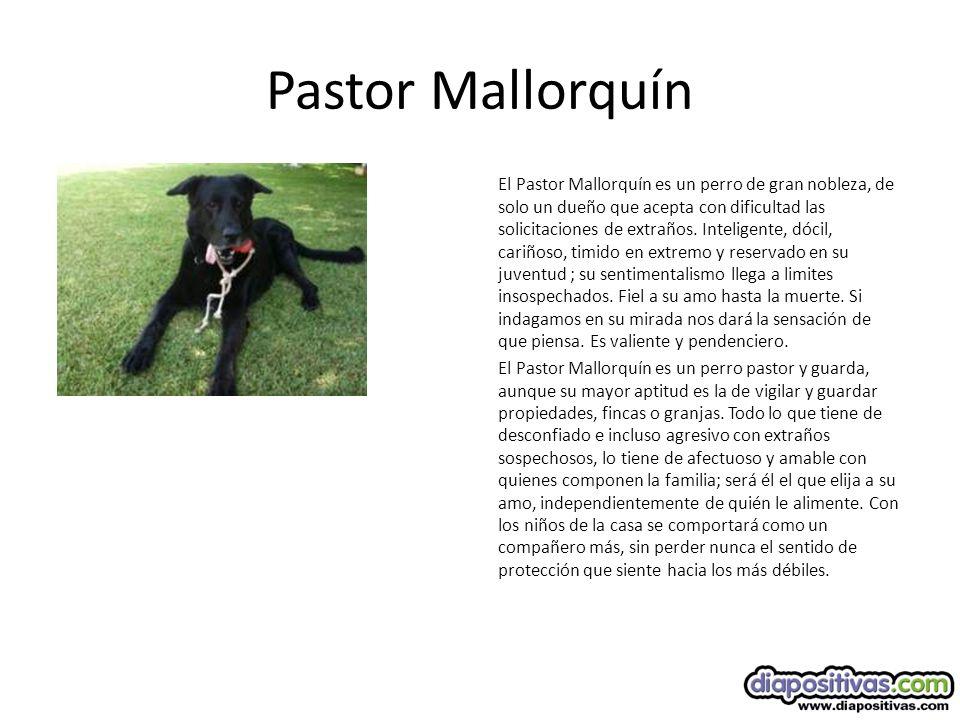 Pastor Mallorquín