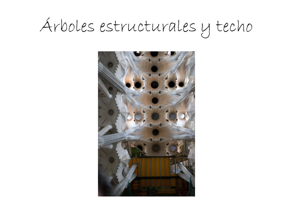 Árboles estructurales y techo