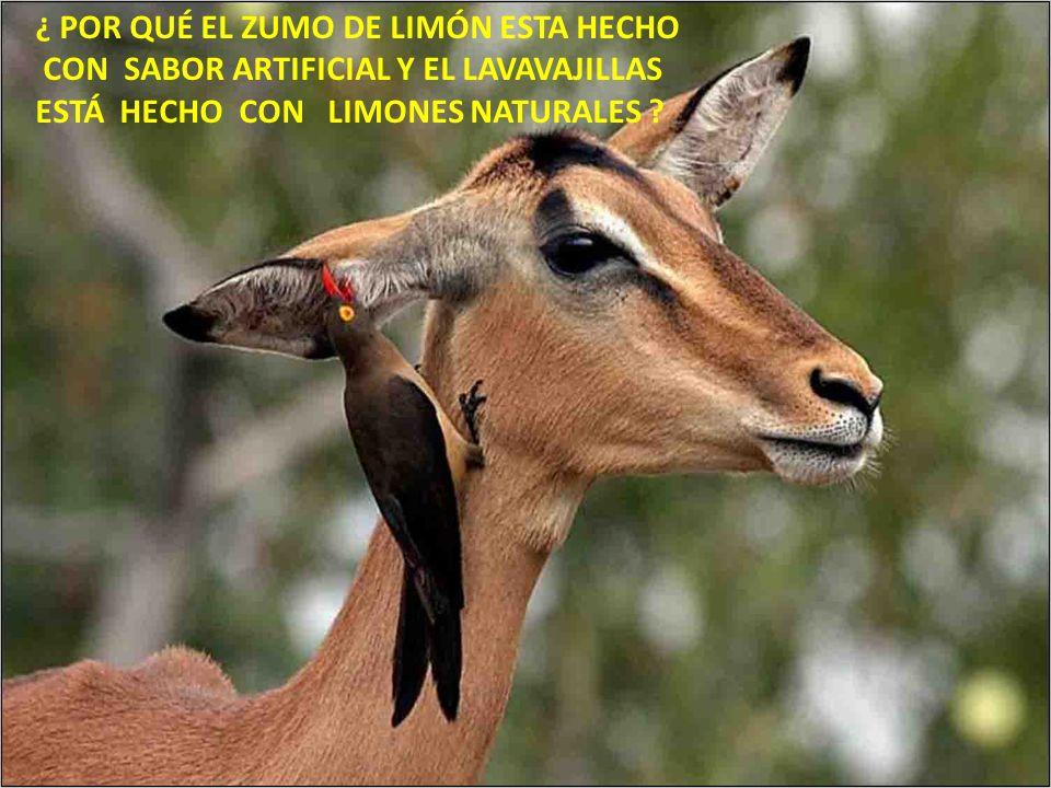 ¿ POR QUÉ EL ZUMO DE LIMÓN ESTA HECHO