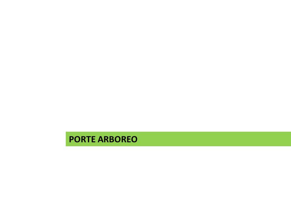 PORTE ARBOREO