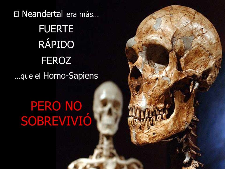 PERO NO SOBREVIVIÓ FUERTE RÁPIDO FEROZ El Neandertal era más…