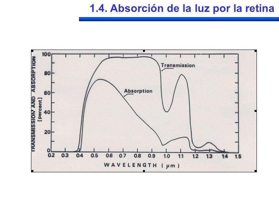 1.4. Absorción de la luz por la retina