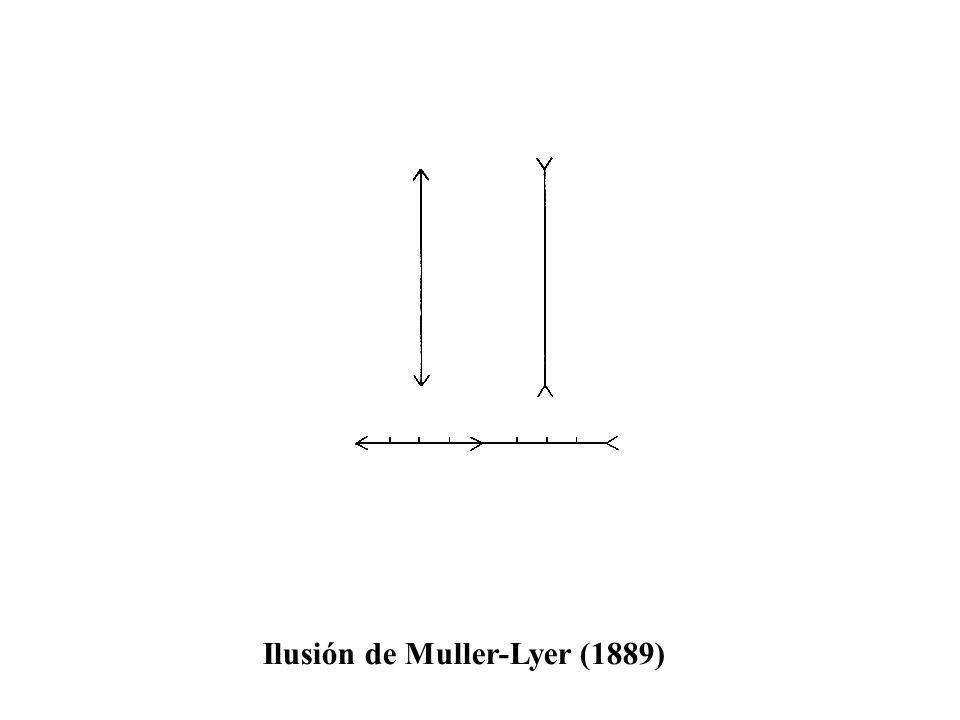 Ilusión de Muller-Lyer (1889)