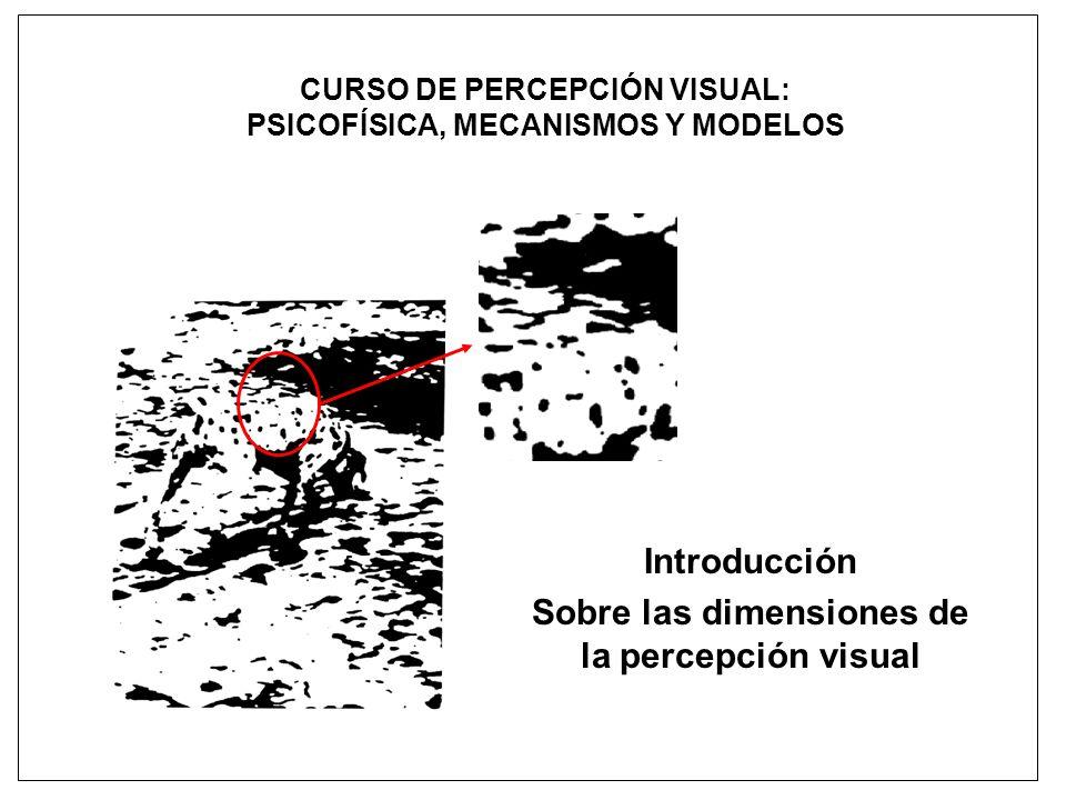 Introducción Sobre las dimensiones de la percepción visual