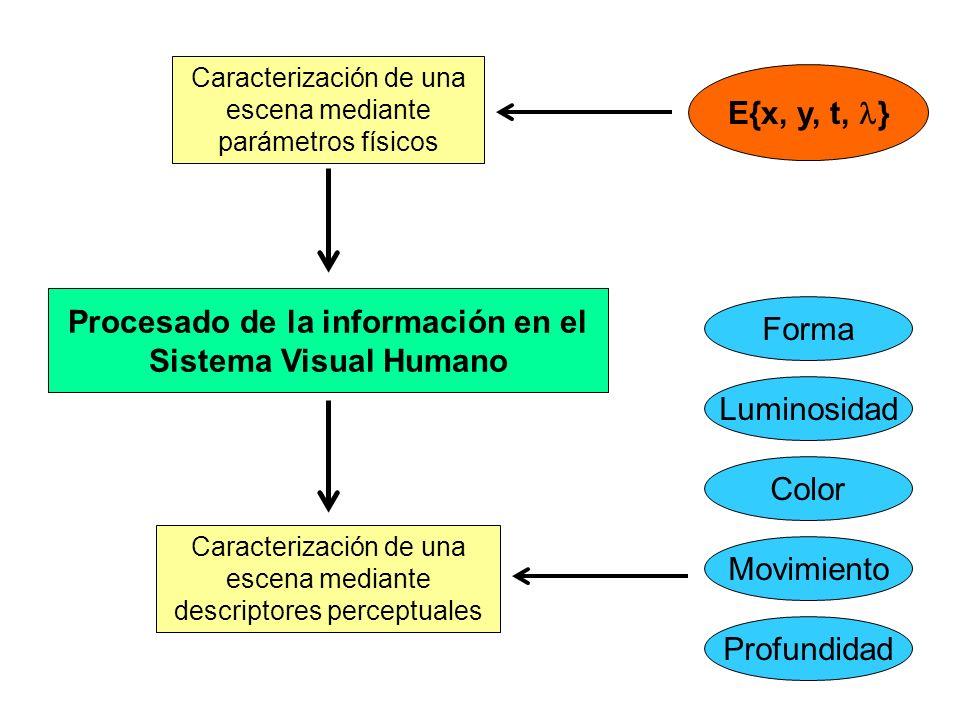 Procesado de la información en el