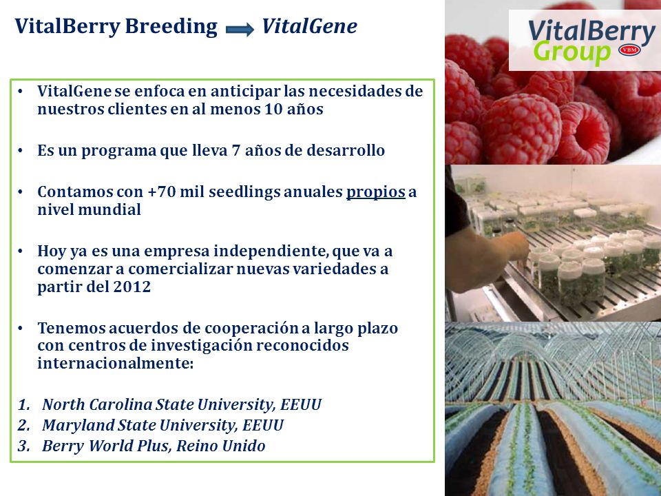 VitalBerry Breeding VitalGene