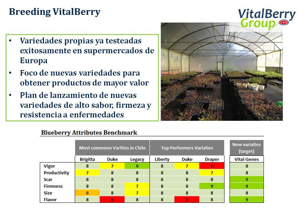 Breeding VitalBerry Variedades propias ya testeadas exitosamente en supermercados de Europa.