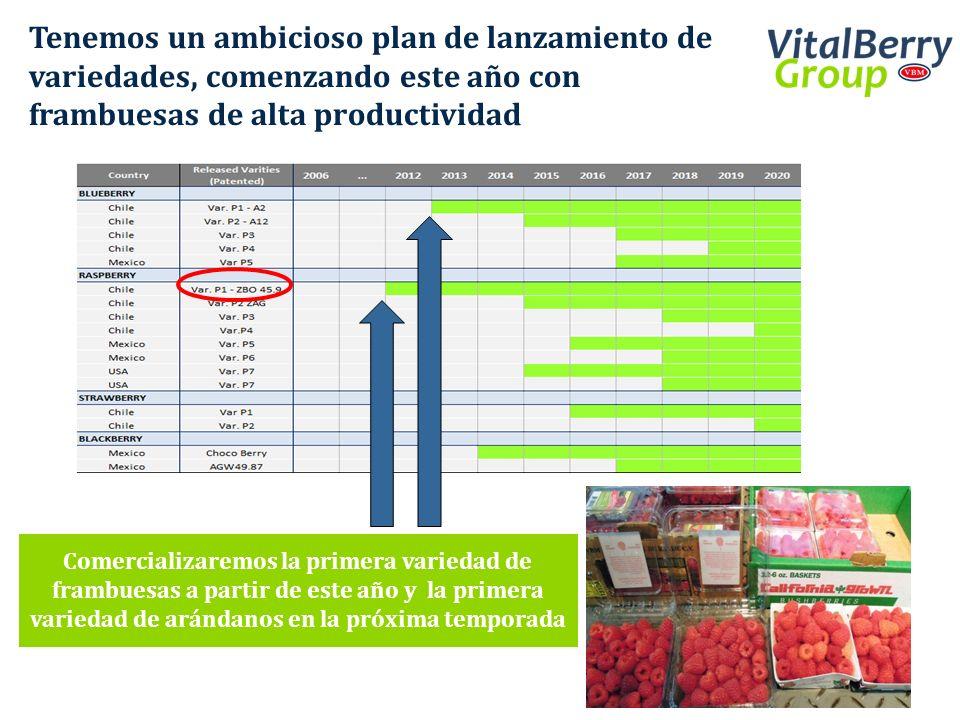 Tenemos un ambicioso plan de lanzamiento de variedades, comenzando este año con frambuesas de alta productividad