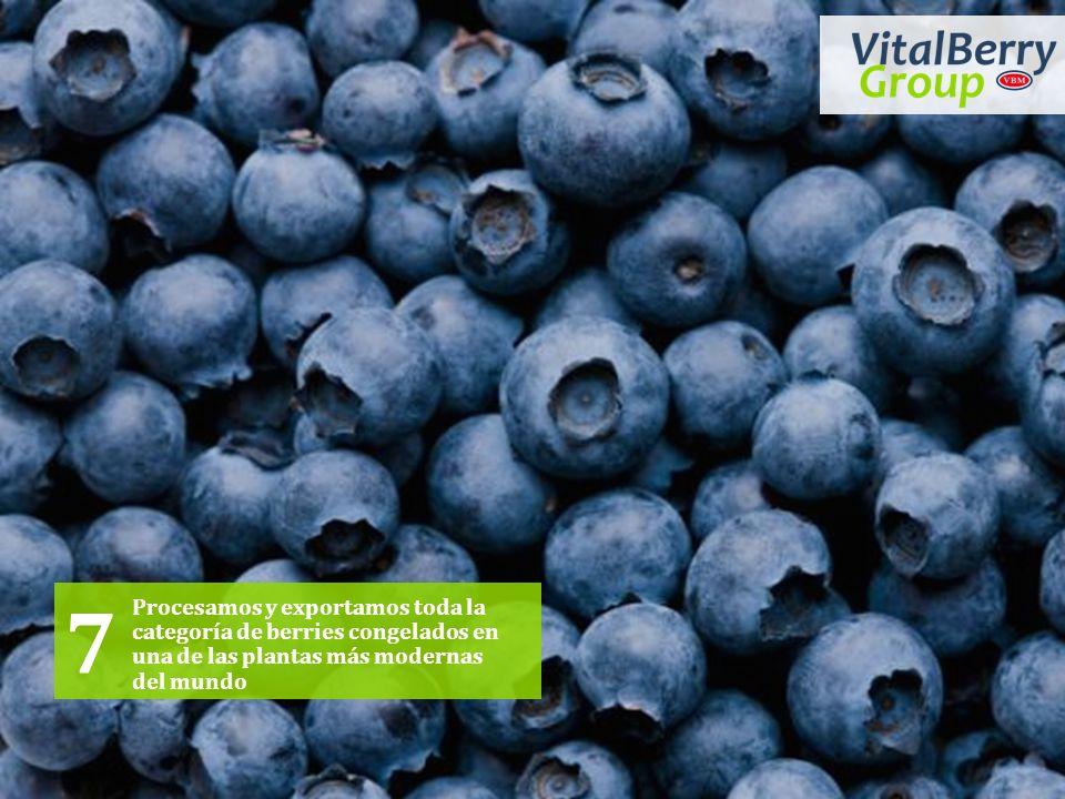7 Procesamos y exportamos toda la categoría de berries congelados en una de las plantas más modernas del mundo.