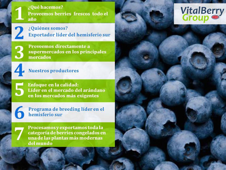 1 2 3 4 5 6 7 ¿Qué hacemos Proveemos berries frescos todo el año