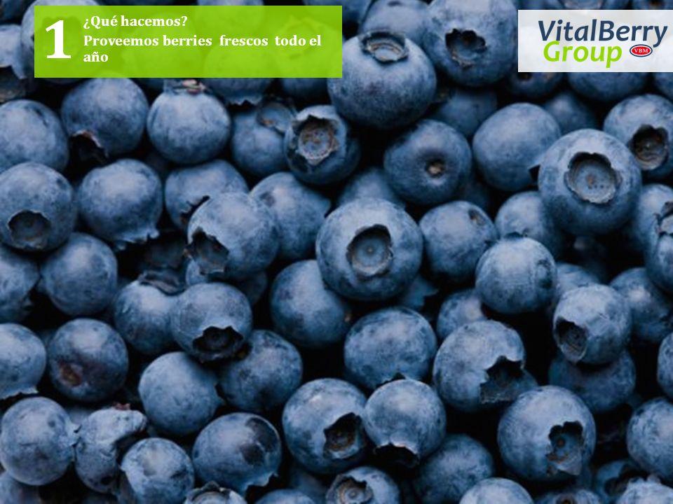 ¿Qué hacemos Proveemos berries frescos todo el año 1