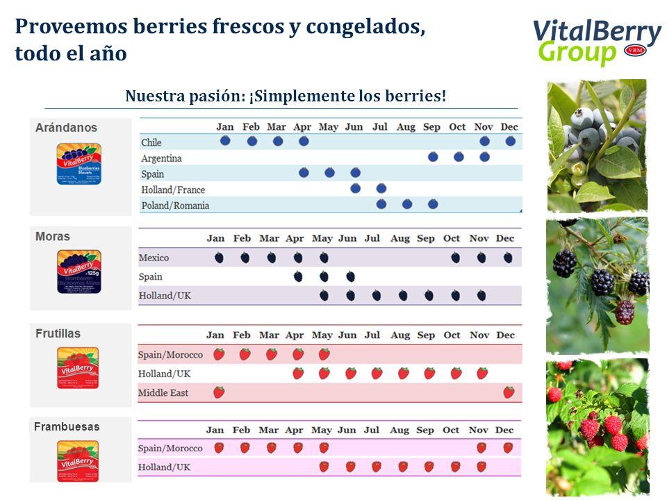 Proveemos berries frescos y congelados, todo el año