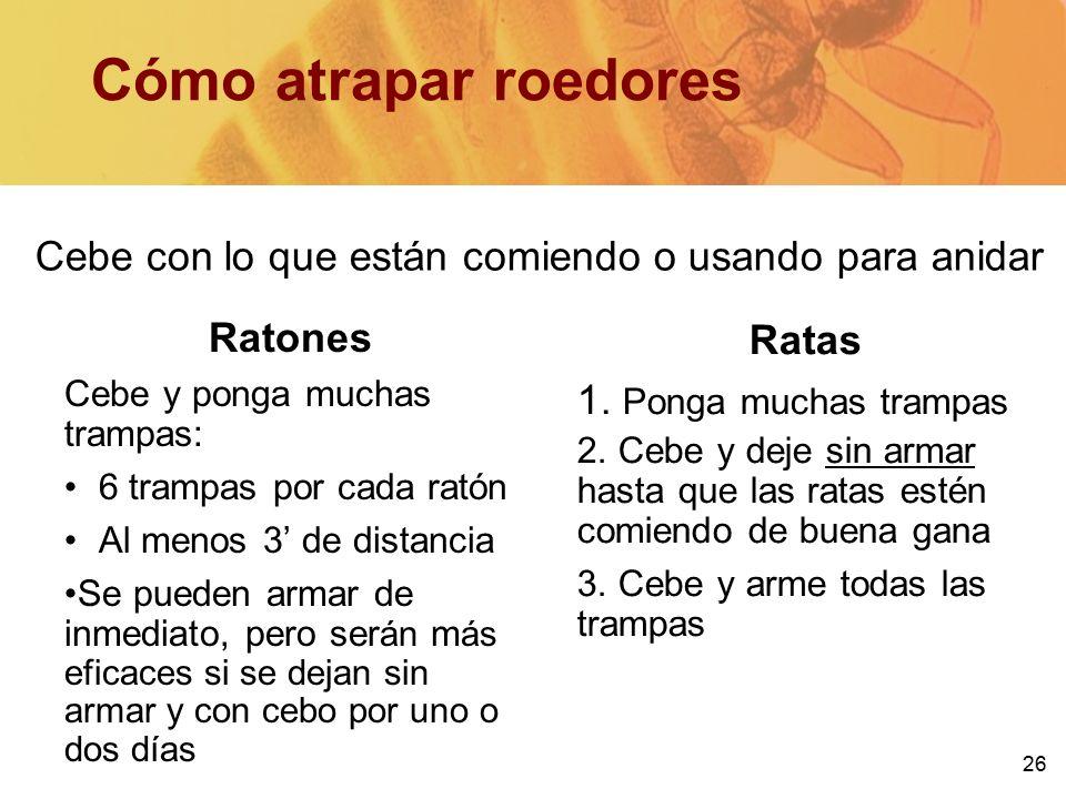 Ipm in multifamily housing training ppt descargar - Como atrapar ratas ...