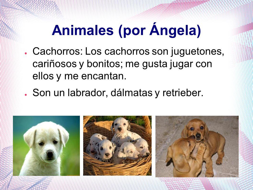 Animales (por Ángela)Cachorros: Los cachorros son juguetones, cariñosos y bonitos; me gusta jugar con ellos y me encantan.