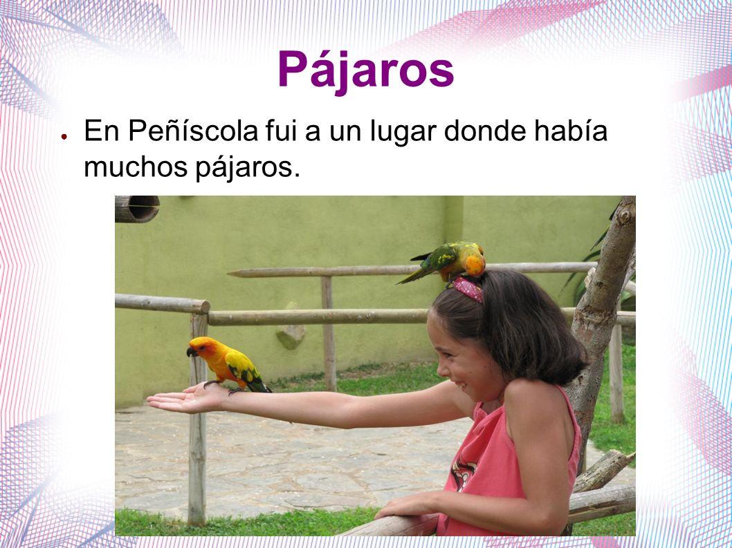 Pájaros En Peñíscola fui a un lugar donde había muchos pájaros.