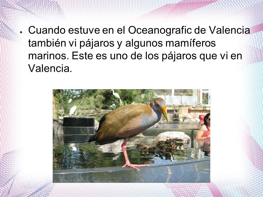 Cuando estuve en el Oceanografic de Valencia también vi pájaros y algunos mamíferos marinos.