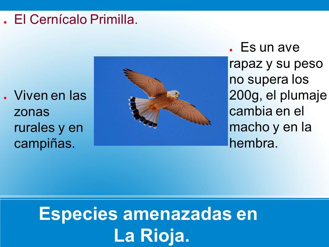 Especies amenazadas en La Rioja.